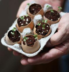 DIY natural planters: eggshells!