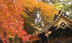 Autumn in Nikko