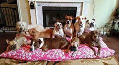 The Pack #360PhotoContest #HumaneSociety #Dogs #Pets #PhotoContest