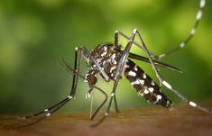 Organic Methods to Eradicate Mosquitoes and Fleas in Your Home - Mosquito Tek of Virginia Beach LLC