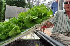 DIY: HOW TO MAKE YOUR OWN HOMEMADE HYDROPONIC SYSTEM - Prepared For That