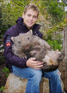"How can you not love this amazing creature???   I even like saying ""wombat""  -  WOMBAT, WOMBAT, WOMBAT...."