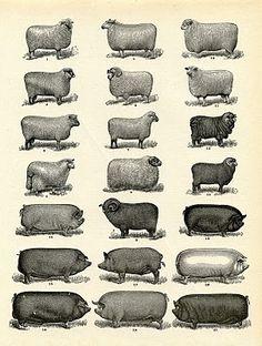 Vintge Printable Download - Farm Animals - Instant Art