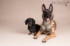 Hondenfotografie Hillegom - Foto van de fotoshoot voor Mechelse Herder Layla en Dwergteckel Shai