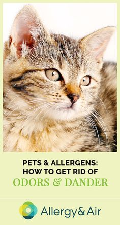 As much as you love your furry family member having a pet in your home may bring upon unpleasant allergy symptoms. Here's how you can cut down on indoor pet allergens and start breathing easy again. Do You Now, Allergic To Cats, Clean My House, Cat Allergies, Indoor Pets, Allergy Symptoms, Breathe Easy, Pet Dander, Four Legged