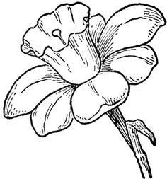 Do you want to learn how to draw a flower called a Daffodil? I have put together a step-by-step tutorial that will help you figure out how to draw Daffodils (They are such pretty flowers) by using simple shapes to build up their form. Pretty Flower Drawing, Flower Pattern Drawing, Floral Drawing, Flower Art, Pretty Flowers, Simple Flowers To Draw, Daffodil Flower, Flower Sketches, Drawing Sketches