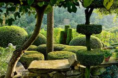 Provencal topiary