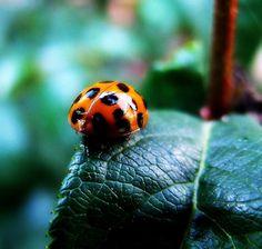 Ladybug butt.
