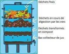 lombricompost : méthode de valorisation des déchets organiques qui fera de vos plantes les plus heureuses du quartier