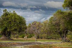Photographic Safaris in the Okavango Delta in Botswana. image: Wilderness
