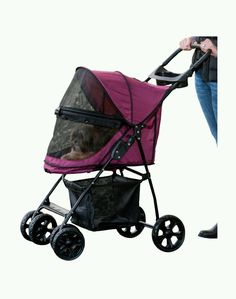 Most Of The Time They Take Me In This Dog Stroller Rome Italy - Cat and dog duo take the best travel photos ever