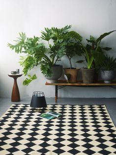 Huonekasvit tekevät kodikkaan tunnelman.