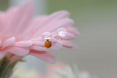 Miss ladybug by Laila Krakeli on 500px