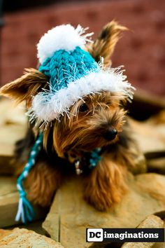 Dog Hat for the winter - Turquoise - Blue - Teal
