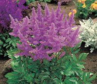 15 Easy Perennial Plants for Shady Gardens