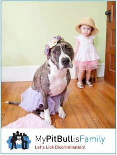 THIS is why I am a loyal Pit bull lover! THEY LOVE KIDS!!!! They PROTECT KIDS! THEY are LOYAL TO their family!!! It's the owners NOT the Breed!