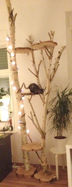 DIY cat stratching tree \/\/ Katzen Kratzbaum Birke selbst gemacht