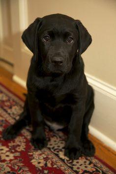threedogsnight:  Keaton by Robert Wash on Flickr.