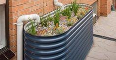 self watering rain garden