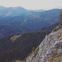 #kiscohard #erdély #tura #hegyvidek #nature #forest #erdővidék
