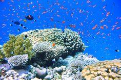 Snorkeling in Sharm El Sheikh - El Faraana Bay - Temple reef