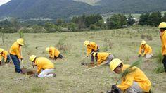En lo que se refiere al tema de inspección y vigilancia forestal, se han realizado varias reuniones con los representantes del Consejo para orientar y capacitar a los pobladores sobre ...