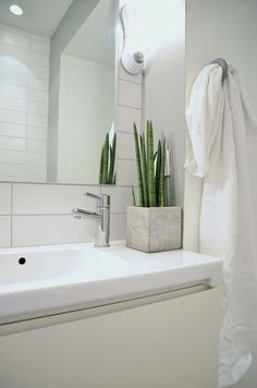 Spiky green snake plant in a concrete planter brings a splash of green to this pure white minimalist bathroom.