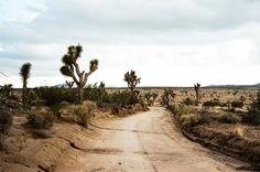 Yucca Brevifolia 2 by Alex Cave