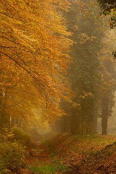autumn in Overijssel, Netherlands