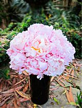 Pretty in Pink From Byron Bay Wedding Flowers