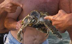 Freed Sea turtle