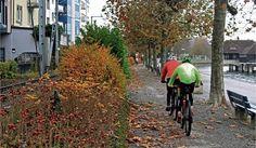 Der Radweg auf der westlichen Seeuferanlage wird breiter, wofür die Rabatte geopfert werden muss. Die Bäume bleiben. Communities Unit