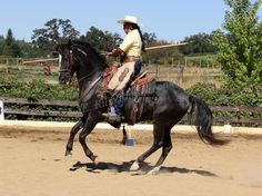 United States Working Equitation Association
