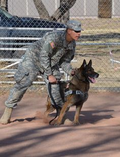 A salute to Military working dogs!