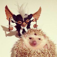 #hedgehog#gremlin