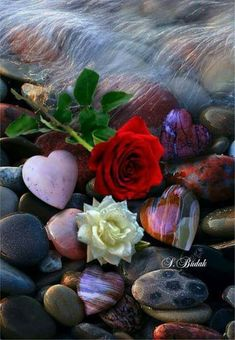 Wallpaper… By Artist Unknown. Heart Wallpaper, Flower Wallpaper, Hearts And Roses, Red Roses, My Flower, Pretty Flowers, Beautiful Roses, Beautiful Images, Animated Love Images