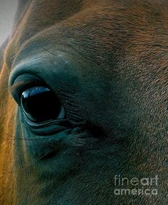 Equine for the Holidays! By Lkb Art & Photography Copyright 2015 All Rights Reserved.