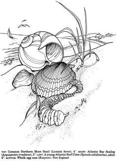 Willkommen Sie bei Dover Publications Schalen von der Welt-Malbuch ...
