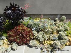 Narrow Side Yard Ideas | recent posts patio ideas the terraces at filoli succulents in large ...