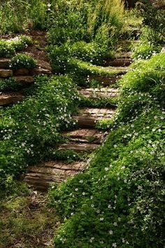 An example of stairs constructed of brick and wood laid into the landscape and lined with a lush groundcover.