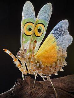 The having of wonderful ideas: Nature