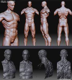 artwork by Vitaly Bulgarov - mode Zbrush Character, 3d Model Character, Character Modeling, Character Art, 3d Anatomy, Anatomy Study, Anatomy Drawing, Figure Drawing Reference, Body Reference