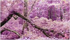Pink Forest Trees- Pink - Breast Cancer Awareness Month