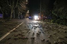 Fear explodes across Europe as thousands of birds fall dead from the sky videos - Strange Sounds Illuminati, Sky Gif, Bird Flu, Falling From The Sky, Bizarre, Starling, Conspiracy Theories, Islands, Game