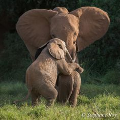 """Elephant mother with her youngster.     (""""tryagaindiary."""")"""