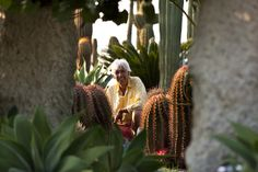Giuseppe and his Cactus Garden