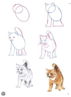 a Cat / Other / Mammals / Drawing Animals / Realistic . - Tiere - -Drawing a Cat / Other / Mammals / Drawing Animals / Realistic .
