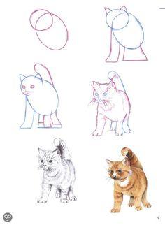 Een kat tekenen / Overig / Zoogdieren / Dieren tekenen / Realistisch tekenen / Tekenen | Goed-leren-tekenen.jouwweb.nl