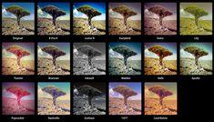 O Instagram é uma rede social para quem ama fotografar e quer ter qualidade nas fotos com baixo custo. O Instagram é dotado de filtros que reforçam as cores ou contrastes, de acordo com a seleção do usuário. [hana-code-insert name='Google' /] A ideia dos fundadores é que as pessoas tenham fotos impecáveis, com poucos recursos …