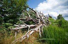 """""""Wenn man in einen Wald eintritt, so ist es, als trete man in das Innere einer Seele.""""  Paul Claudel (1868 - 1955)"""